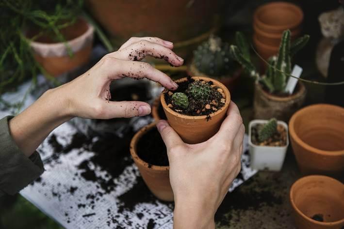 Žena presađuje cveće iz saksije